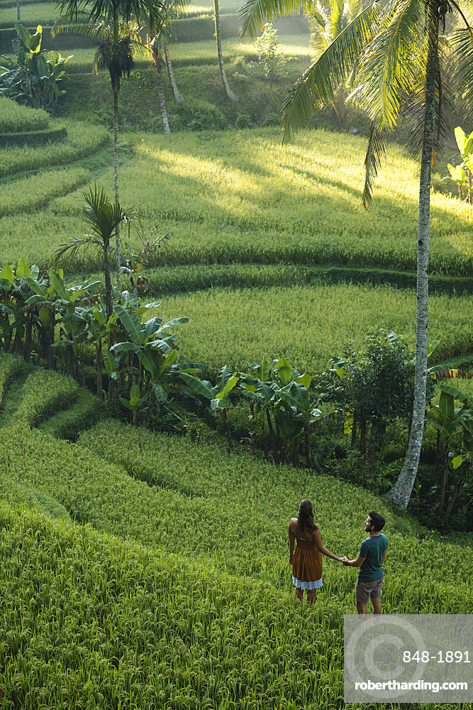 Tegalalang Rice Terraces near Ubud, Bali, Indonesia, Southeast Asia, Asia