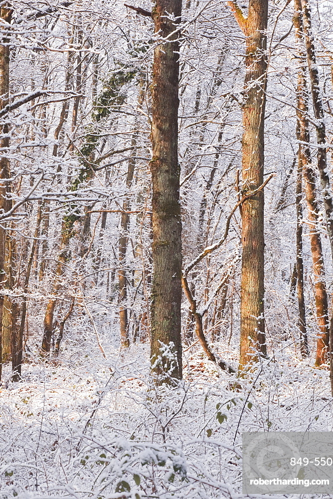 Snow covered trees in the Loire Valley area, Loir-et-Cher, Centre, France, Europe