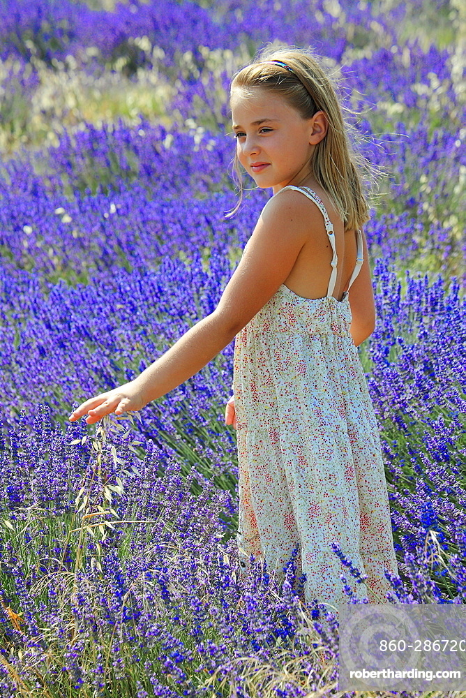 Little girl in a field of lavender, Provence, France