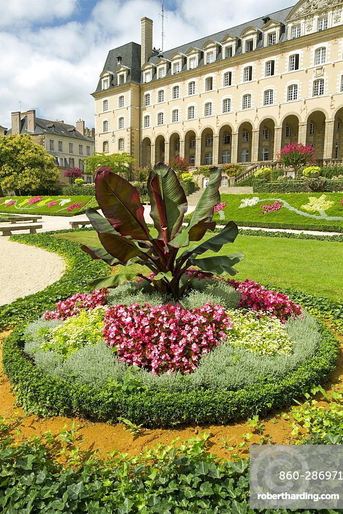 Red Abyssinian banana (Ensete ventricosum 'Maurelii'), Palais Saint-Georges garden, Rennes, Ille-et-Vilaine, France