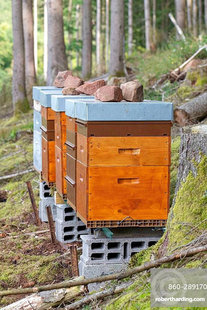 Hives at the forest edge in summer, Moselle