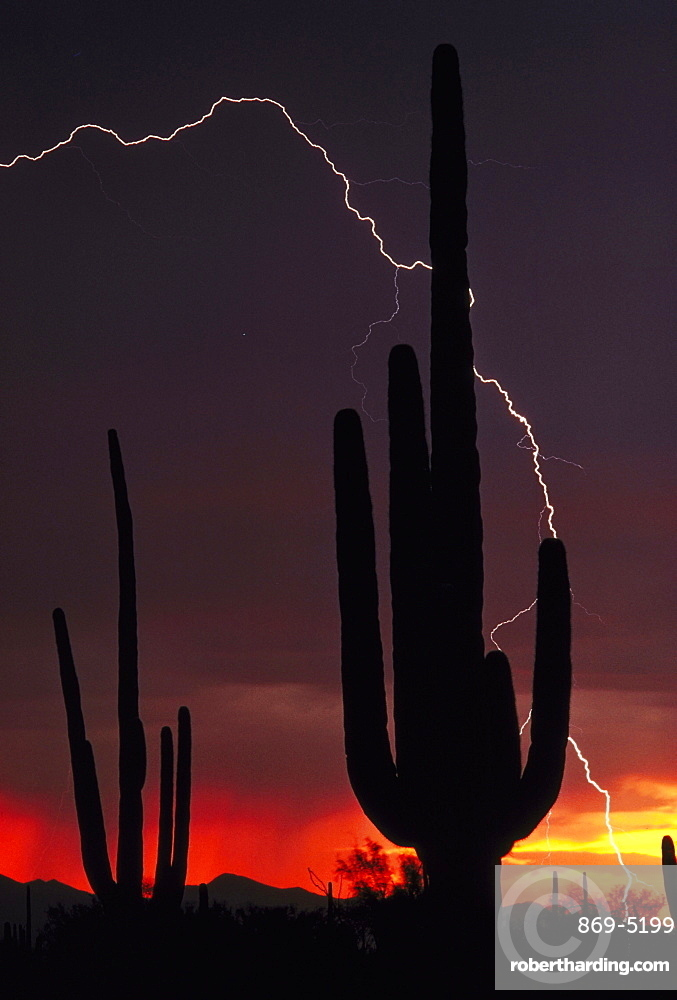 lightning storm over landscape with silhouetted saguaro cacti USA