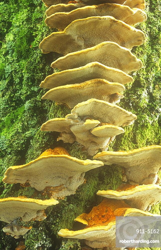 Fungi growing on a tree trunk